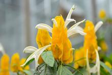Beautiful Yellow White Flowers...