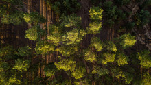 Aerial View Of A Lush Green Fo...