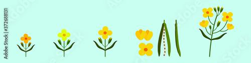 Fototapeta set of canola flowers cartoon icon design template with various models