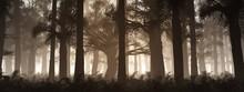 Gloomy Autumn Park In The Fog,...