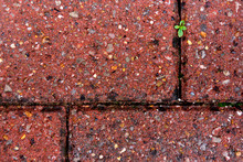 Red Floor Brick Close Up View