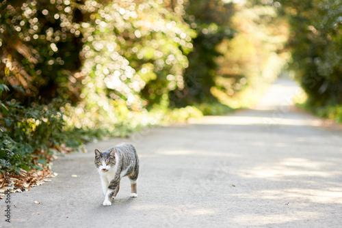 山道で歩いている猫 Canvas Print