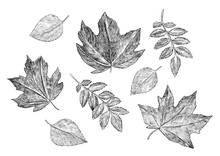 A Set Of Different Leaves. Aut...