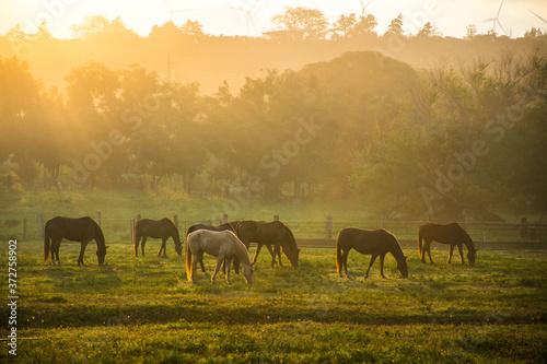 Obraz na plátně herd of horses grazing in the field