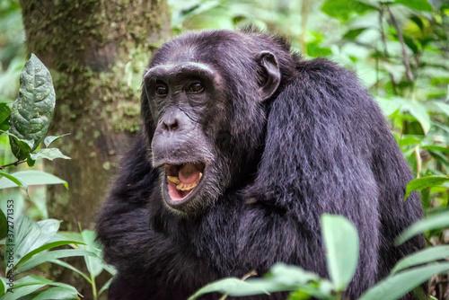 Fotografia Gombe stream national park