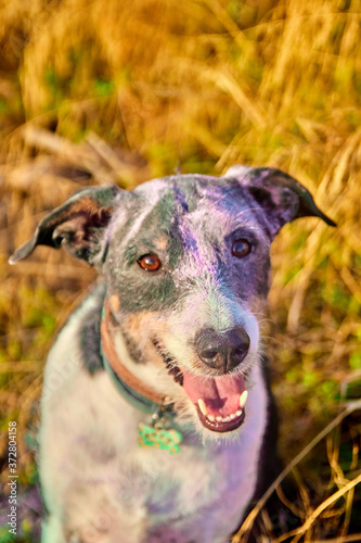 Dog posing with dust of colours