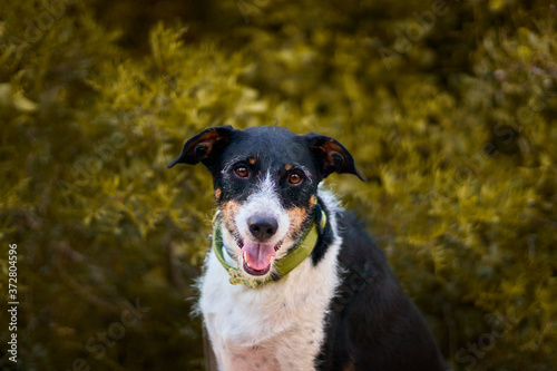 dog posing in the forest with warm colours