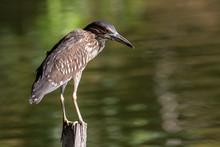 Nature Wildlife Bird Of Rufous...