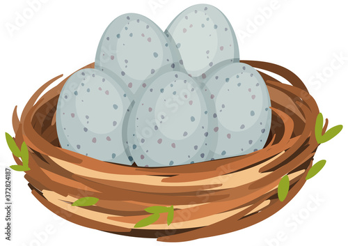 Photo Eggs in the bird nest isolated