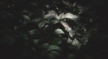 Dark Green Mysterious Natural ...