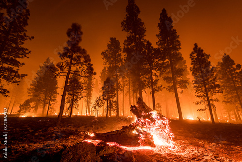 Fallen log burns in California wildfire Canvas-taulu