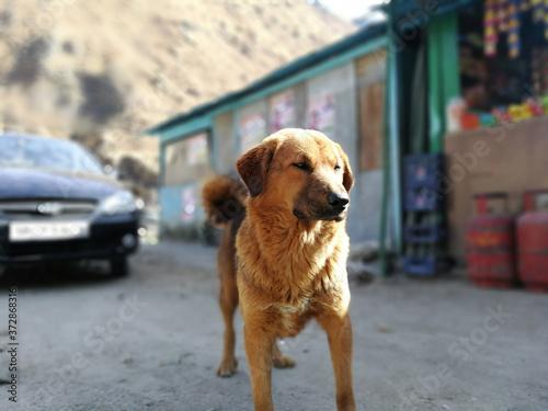 Papel de parede Brown cute companion dog front view