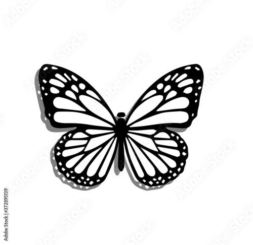 Fototapeta butterfly isolated on white