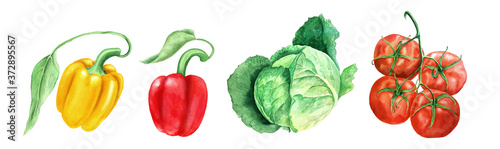 Canvastavla Set of vegetables: tomato, head cabbage and yellow and paprikas watercolor illus