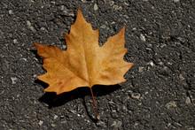 Dry Yellow Autumn Leaf On Gray...