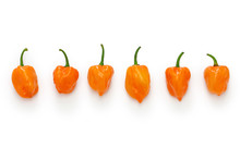 Habanero Hot Chili Pepper Isolated On White Background