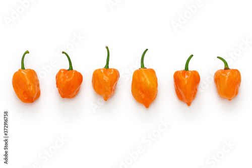 Fototapeta habanero hot chili pepper isolated on white background obraz
