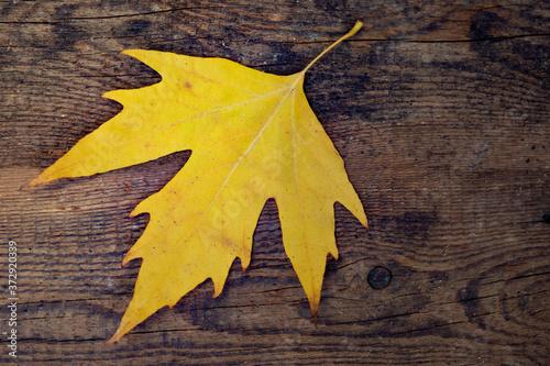 Obraz na plátně Autumn background