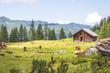 Leinwanddruck Bild - Idyllic mountain landscape in the alps: Mountain chalet, cows, meadows and blue sky