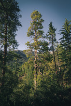 Idyllwild Trail
