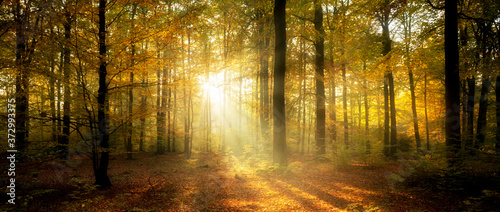 Beautiful morning in misty autumn forest