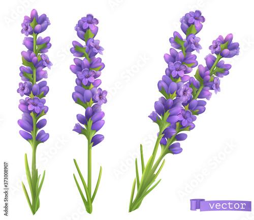 Fotografia Lavender flowers. 3d vector realistic set
