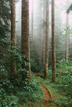 Vertical Shot Of Footpath Along With Trees And Plants In A Forest