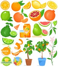 Citrus Fruit Vector Illustration Set. Cartoon Flat Food Drink Citrus Collection With Fresh Orange Juice, Citric Plant Growing In Pot, Zest, Slices Of Orange Lemon Grapefruit Lime Isolated On White