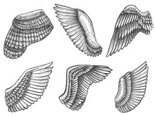 Hand Drawn Wings. Sketch Bird Or Angel Wing With Feathers, Engraved Different Heraldic Symbols For Tattoo Or Emblem Vintage Vector Set. Wing Elements In Different Position And Shape