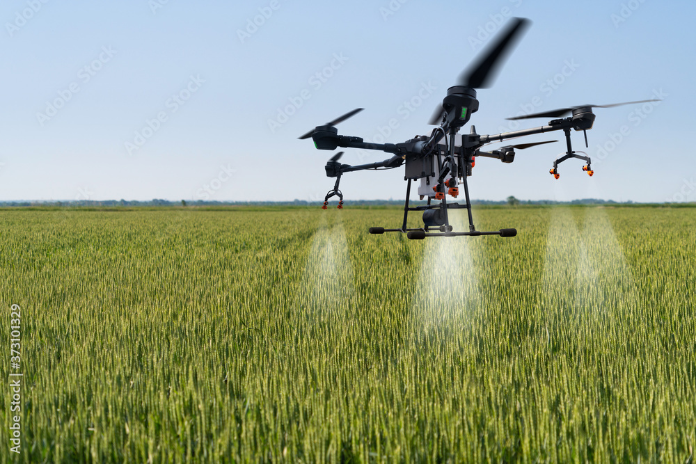 Fototapeta Drone sprayer flies over the wheat field. Smart farming and precision agriculture