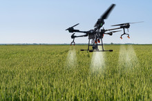 Drone Sprayer Flies Over The Wheat Field. Smart Farming And Precision Agriculture