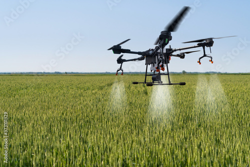 Fototapeta Drone sprayer flies over the wheat field. Smart farming and precision agriculture obraz