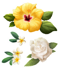 Set Of Tropical Flowers Isolated On White Background. Clip Art Collection Of Hibiscus, Gardenia And Plumeria Flowers.