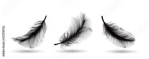 Fotografie, Obraz Black Flying Bird Feather Isolated on Dark Background