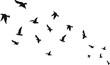 flying bird set hummer bird vector set