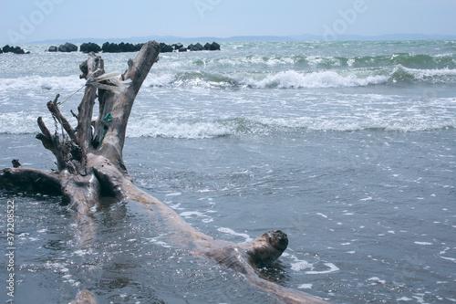Fototapeta 流木のと海