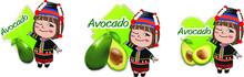 Hilltribe Avocado