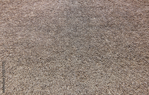 Fototapeta Texture of the reed roof