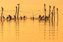 Great Cormorants Birds In Silh...