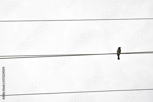 Fotomural bird on wire