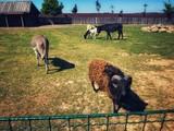 zwierzęta w zoo