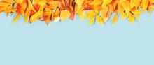 Autumn Season. Yellow And Brig...