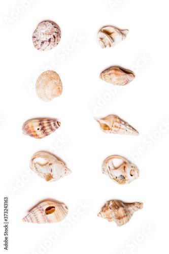 Photo adriatic sea seashells selection isolated on white