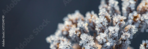 Foto Beautiful crystals of rime ice on plants during frosts