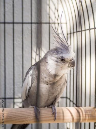 Photo Closeup shot of a corella in a cage