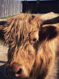 Fototapeta Zwierzęta - zwierzę