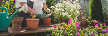 Gardening Girl Replanting Green Pasture In Home Garden Workplace Home Among Plants In The Home Garden ,agriculture, The Concept Of Freelance, Work At Home, A Cozy Place, Slow Life, Mood