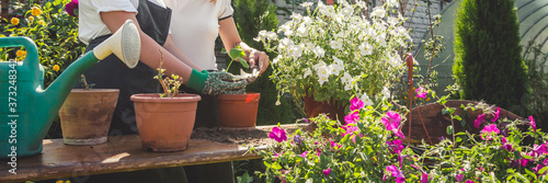 Gardening Girl replanting green pasture in home garden Workplace home among plan Fototapet
