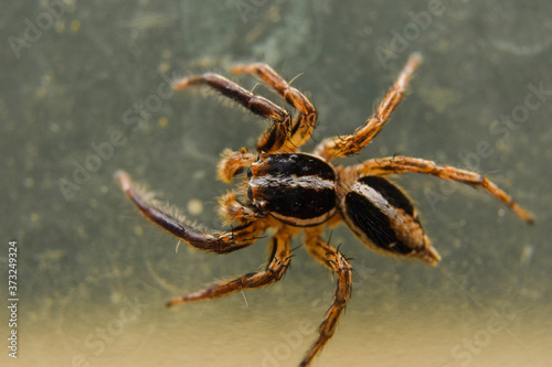 spider on the glass Wallpaper Mural