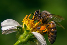 Closeup Shot Of A Bee On A Cha...